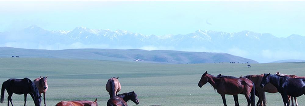 大自然で育った食肉用の放牧馬